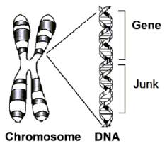 From DNA to Genetic Genealogy