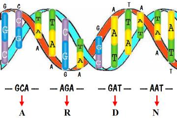 dna the strands of life discovered in 1868 Revealing dna as the molecule of life  the discovery of the structure of dna by james watson and francis crick in 1953 is one of the most famous scientific.