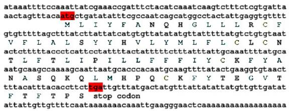 Essay about how DNA codes for a protein.?